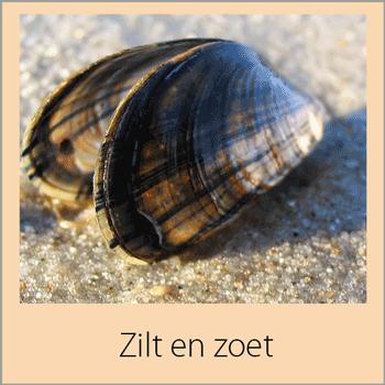 De route loopt vanaf 's-Gravenpolder over de Weeldijk naar Eversdijk. U rijdt door dit karakteristieke plaatsje naar het dorpje Schorre. Vanaf Schorre rijdt u over mooie landweggetjes naar Hansweert. Hier komt u bij een fantastisch uitkijkpunt van de Westerschelde. De Westerschelde is één van de drukst bevaren rivieren van Nederland.